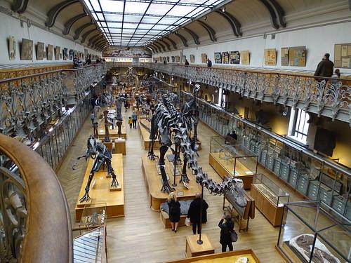 """Galerie de Paléontologie et d'Anatomie comparée Paris • <a style=""""font-size:0.8em;"""" href=""""http://www.flickr.com/photos/160223425@N04/27081180809/"""" target=""""_blank"""">View on Flickr</a>"""