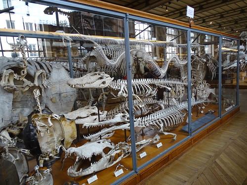 """Galerie de Paléontologie et d'Anatomie comparée Paris • <a style=""""font-size:0.8em;"""" href=""""http://www.flickr.com/photos/160223425@N04/37970253755/"""" target=""""_blank"""">View on Flickr</a>"""