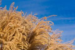 Winter Grass: Luminar2018