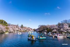 井の頭恩賜公園  Inokashira Park
