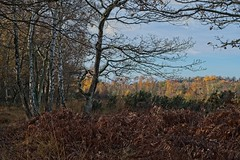 Autumnal Whitmoor Common-DSCF6539
