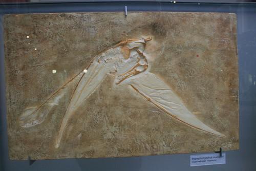 "Museum für Naturkunde • <a style=""font-size:0.8em;"" href=""http://www.flickr.com/photos/160223425@N04/25086355318/"" target=""_blank"">View on Flickr</a>"