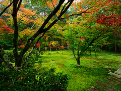 西芳寺(苔寺) Moss garden of Saihoji