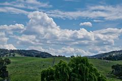 Tenterfield countryside