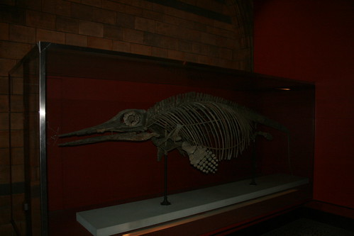 """Natural History Museum London • <a style=""""font-size:0.8em;"""" href=""""http://www.flickr.com/photos/160223425@N04/38894613461/"""" target=""""_blank"""">View on Flickr</a>"""