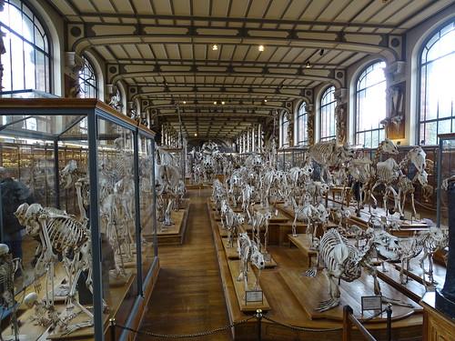 """Galerie de Paléontologie et d'Anatomie comparée Paris • <a style=""""font-size:0.8em;"""" href=""""http://www.flickr.com/photos/160223425@N04/37970245545/"""" target=""""_blank"""">View on Flickr</a>"""