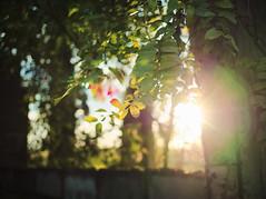 ruins sun glow
