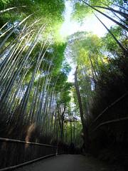 嵯峨野 竹林の道    Road of Bamboo Forest