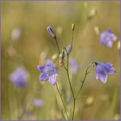 Thema Bloemen IMG_6705