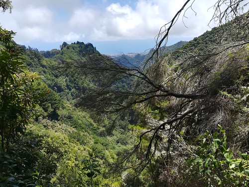 """Madeira Levada hike • <a style=""""font-size:0.8em;"""" href=""""http://www.flickr.com/photos/160223425@N04/27059814979/"""" target=""""_blank"""">View on Flickr</a>"""