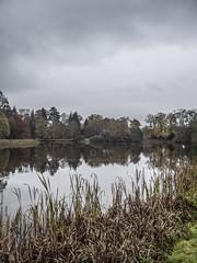 Swan Pool, Shobdon Arboretum.