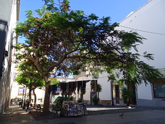 """La Palma • <a style=""""font-size:0.8em;"""" href=""""http://www.flickr.com/photos/160223425@N04/23990667007/"""" target=""""_blank"""">View on Flickr</a>"""