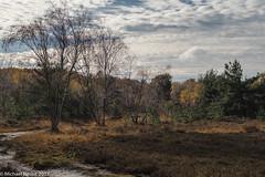 Autumn in Whitmoor-6511