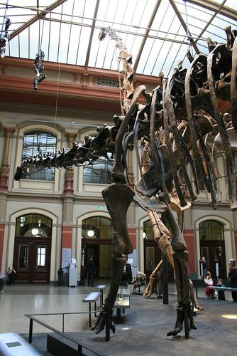 "Museum für Naturkunde • <a style=""font-size:0.8em;"" href=""http://www.flickr.com/photos/160223425@N04/27180782229/"" target=""_blank"">View on Flickr</a>"