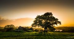 Bretagne-Iffendic-Warm Sun for Cold Times