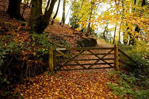 Autumn In The Quantocks