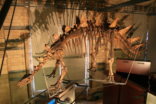 "Natural History Museum London • <a style=""font-size:0.8em;"" href=""http://www.flickr.com/photos/160223425@N04/38894580091/"" target=""_blank"">View on Flickr</a>"
