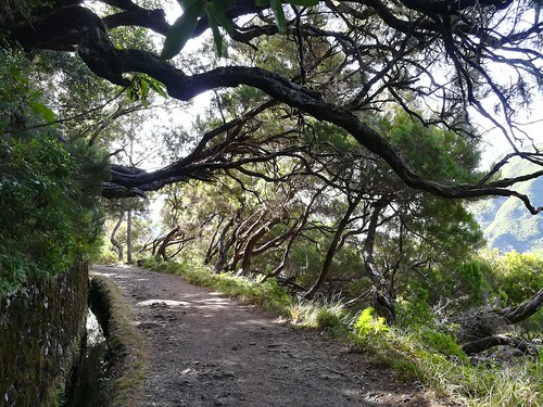 """Madeira Levada hike • <a style=""""font-size:0.8em;"""" href=""""http://www.flickr.com/photos/160223425@N04/24963811798/"""" target=""""_blank"""">View on Flickr</a>"""