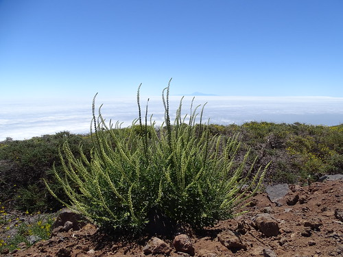 """La Palma • <a style=""""font-size:0.8em;"""" href=""""http://www.flickr.com/photos/160223425@N04/38139590904/"""" target=""""_blank"""">View on Flickr</a>"""