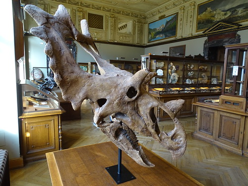 """Naturhistorisches Museum Wien • <a style=""""font-size:0.8em;"""" href=""""http://www.flickr.com/photos/160223425@N04/38810908871/"""" target=""""_blank"""">View on Flickr</a>"""
