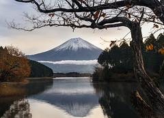 Lake Tanuki_2