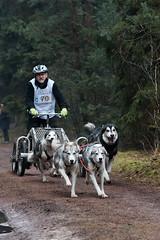 sledehonden-3 sport eigen thema