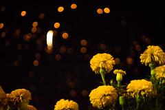 Flowers under Loy Krathong