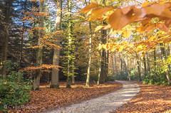 Thema 4 seizoenen: Herfst
