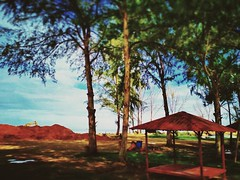 https://www.google.com/maps/place/3%C2%B011'42.4%22N+101%C2%B018'28.4%22E/@3.195111,101.307889,17z?hl=en&gl=gb #travel #holiday #rural #tree #Asian #Malaysia #Selangor #PantaiRemis #travelMalaysia #holidayMalaysia #旅行 #度假 #乡村 #树木 #亚洲 #马来西亚 #雪兰莪 #马来西亚度假 #马