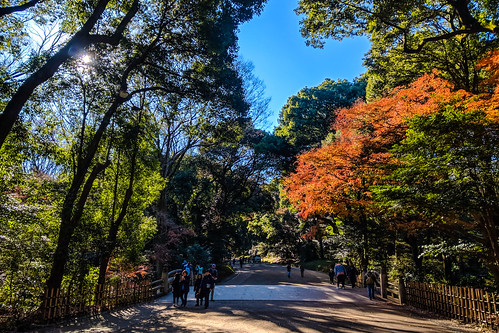 Into Meiji Shrine / 明治神宮大道