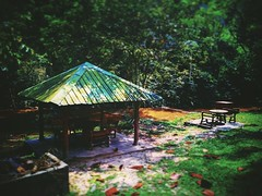 Templer Park, 48000 Rawang, Selangor https://goo.gl/maps/6mLkV6xB36x #park #tree #nature #travel #holiday #trip #Asian #Malaysia #Selangor #rawang #travelMalaysia #holidayMalaysia #公园 #树木 #旅行 #度假 #亚洲 #马来西亚 #雪兰莪 #马来西亚旅行 #马来西亚度假 #大自然 #河 #river #grass #草