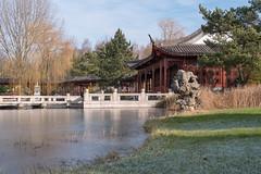 Berlin, Gärten der Welt:  Zugefrorener See am Teehaus zum Osmanthussaft - Berlin, Chinese Garden in the Gardens of the World park: Frozen lake in front of the Tea House