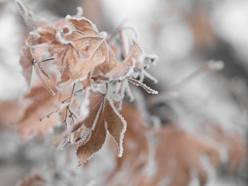 Frostwork_MD_180114_22