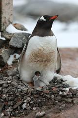 A trip to antarcitca