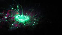 Fluo diving magic