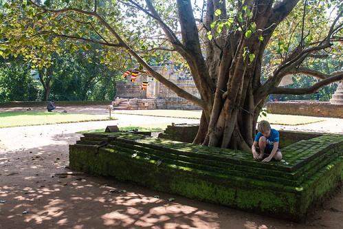 Entre Kandy et Dambulla