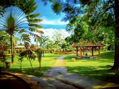 Taman Selayang Utama, 68100 Batu Caves, Selangor https://goo.gl/maps/1ZkKCGEfbAr  #tree #garden #travel #holiday #trip #Asian #Malaysia #Selangor #selayang #travelMalaysia #holidayMalaysia #树木 #旅行 #度假 #亚洲 #马来西亚 #雪兰莪 #马来西亚旅行 #马来西亚度假 #kampung #green #绿色 #ta