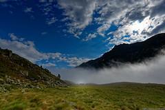 """Vaches dans le brume • <a style=""""font-size:0.8em;"""" href=""""http://www.flickr.com/photos/30115700@N08/27958671529/"""" target=""""_blank"""">Voir sur Flickr</a>"""
