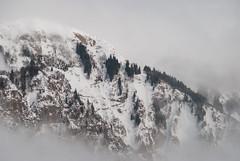 fog&snow.