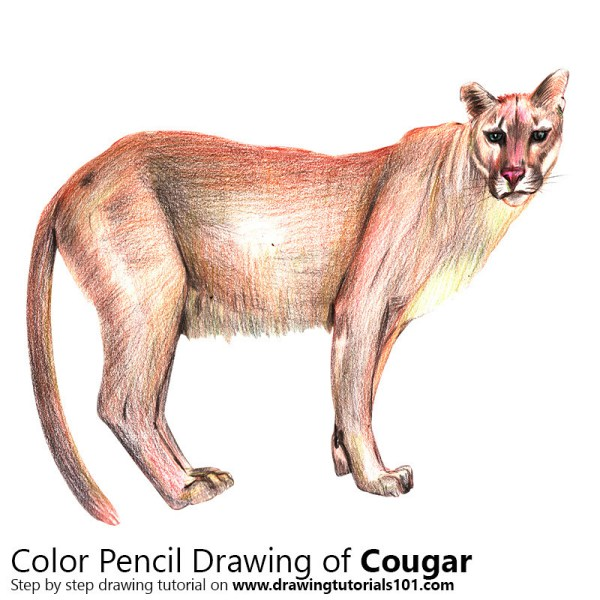 World' Of Cougar And Puma - Hive Mind