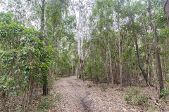Coombabah circuit