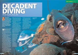 26---diver_-madagascar-diving_000