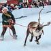 reindeer_race_DSC0256
