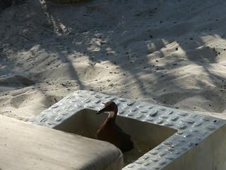 Foot bath visitor