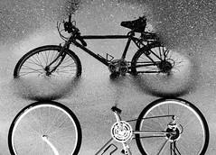 BikeReflectionCarly