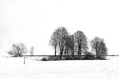Winter landscape / Winter Landschaft