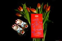 choco and tulipanes