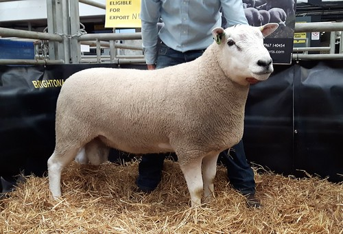 3000gns ram at Carlsile sold to Bush