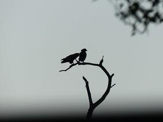 Tembe birds, KwaZulu-Natal/ Mozambique border