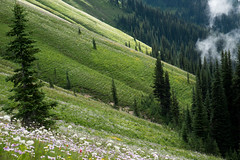 Miners RIdge meadows